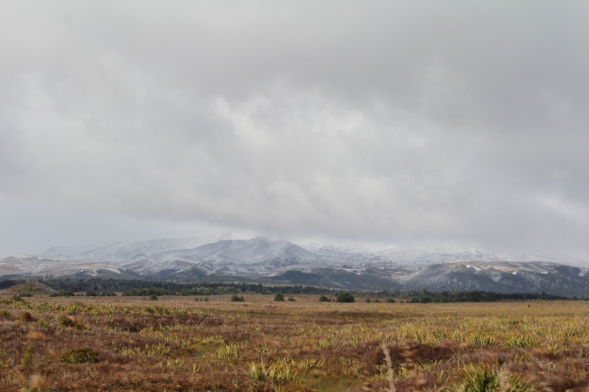 Snowy mountains in the background