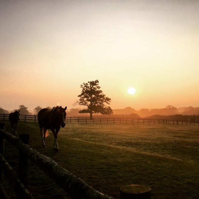 Amazing sunrise this morning while feeding the horses